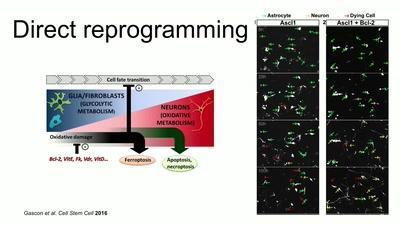 Reprogramming human cells