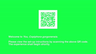 You, Copiphora gorgonensis (Seizure warning!)